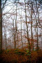 einfach nur Wald