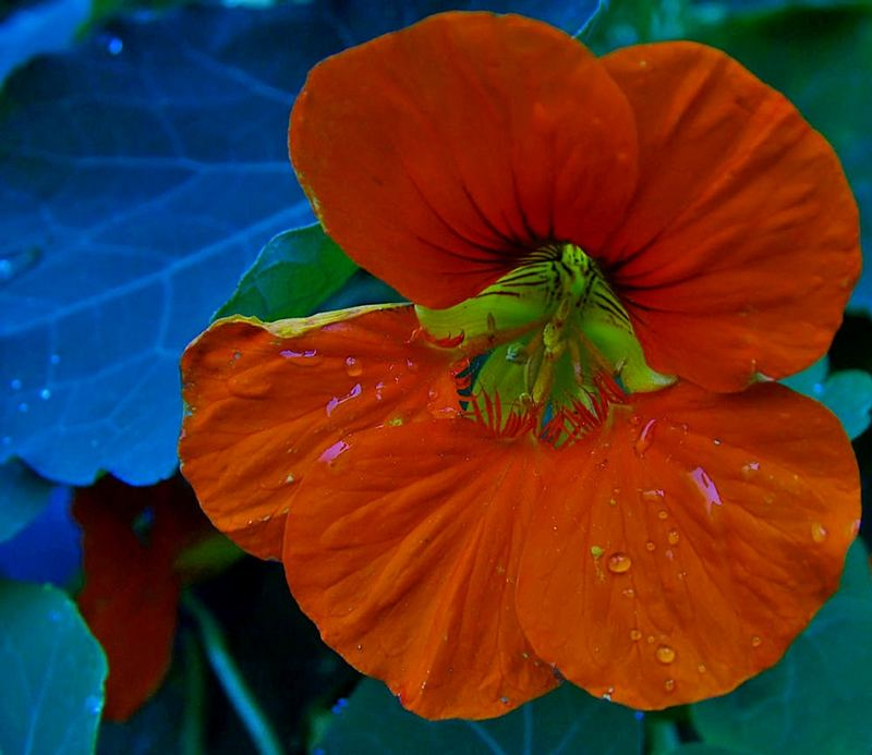 einfach orange