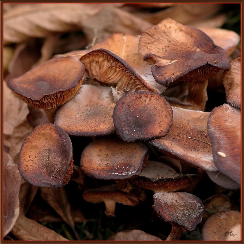 einfach Pilze