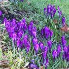 Einfach so'n bisschen Frühling für uns alle...