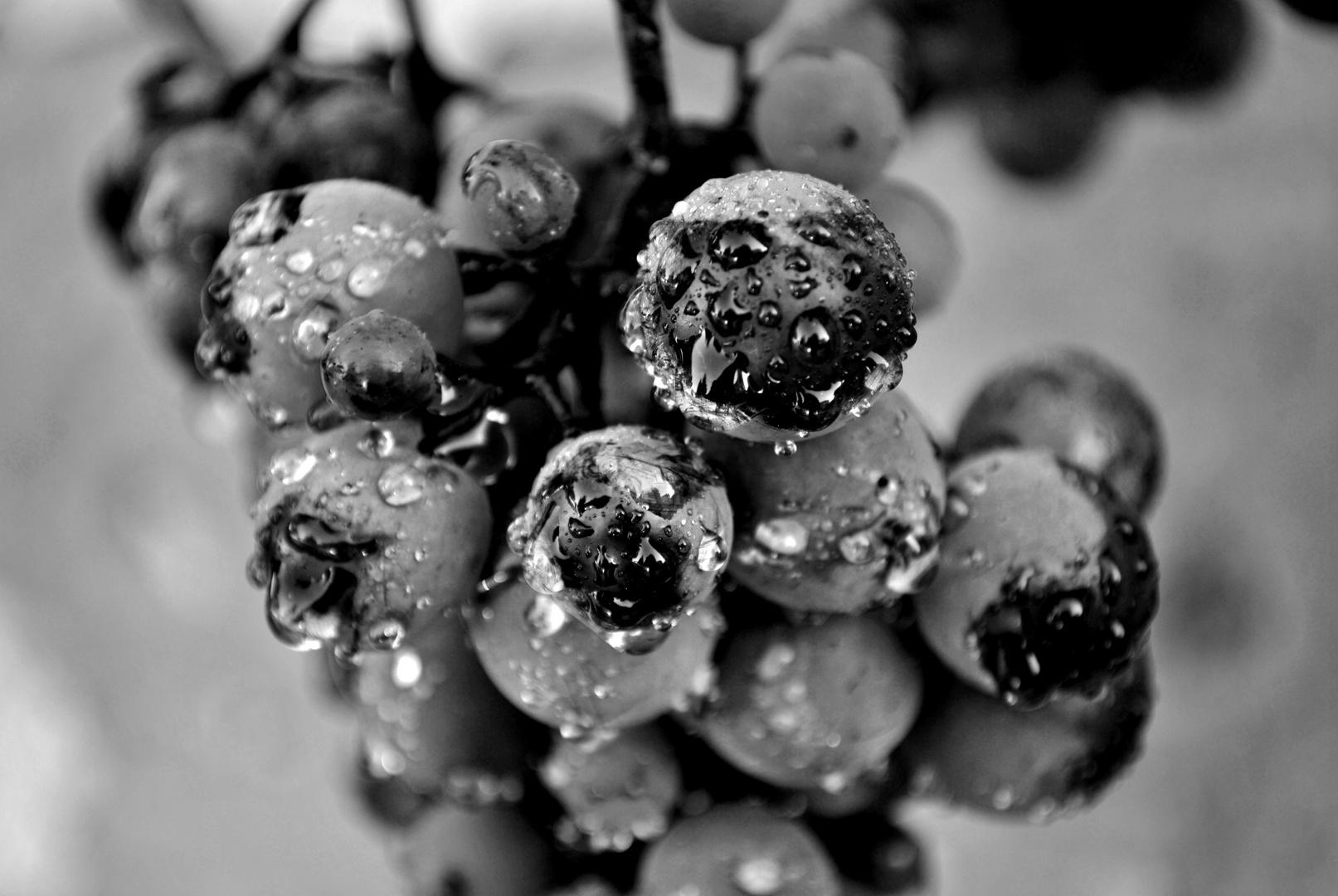 Einfach Trauben
