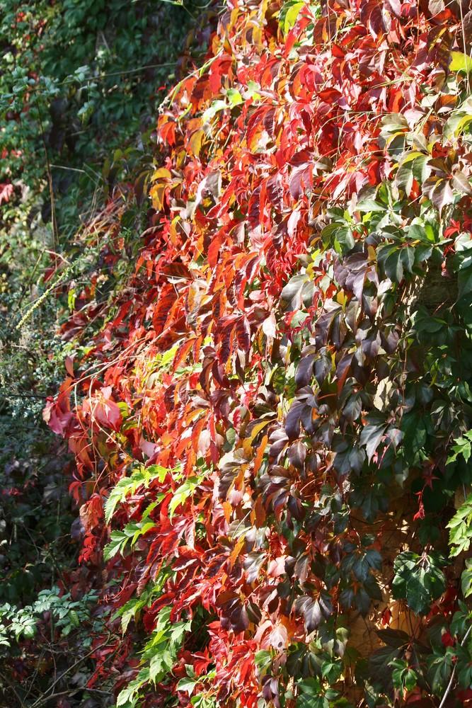 Einfallender Herbst