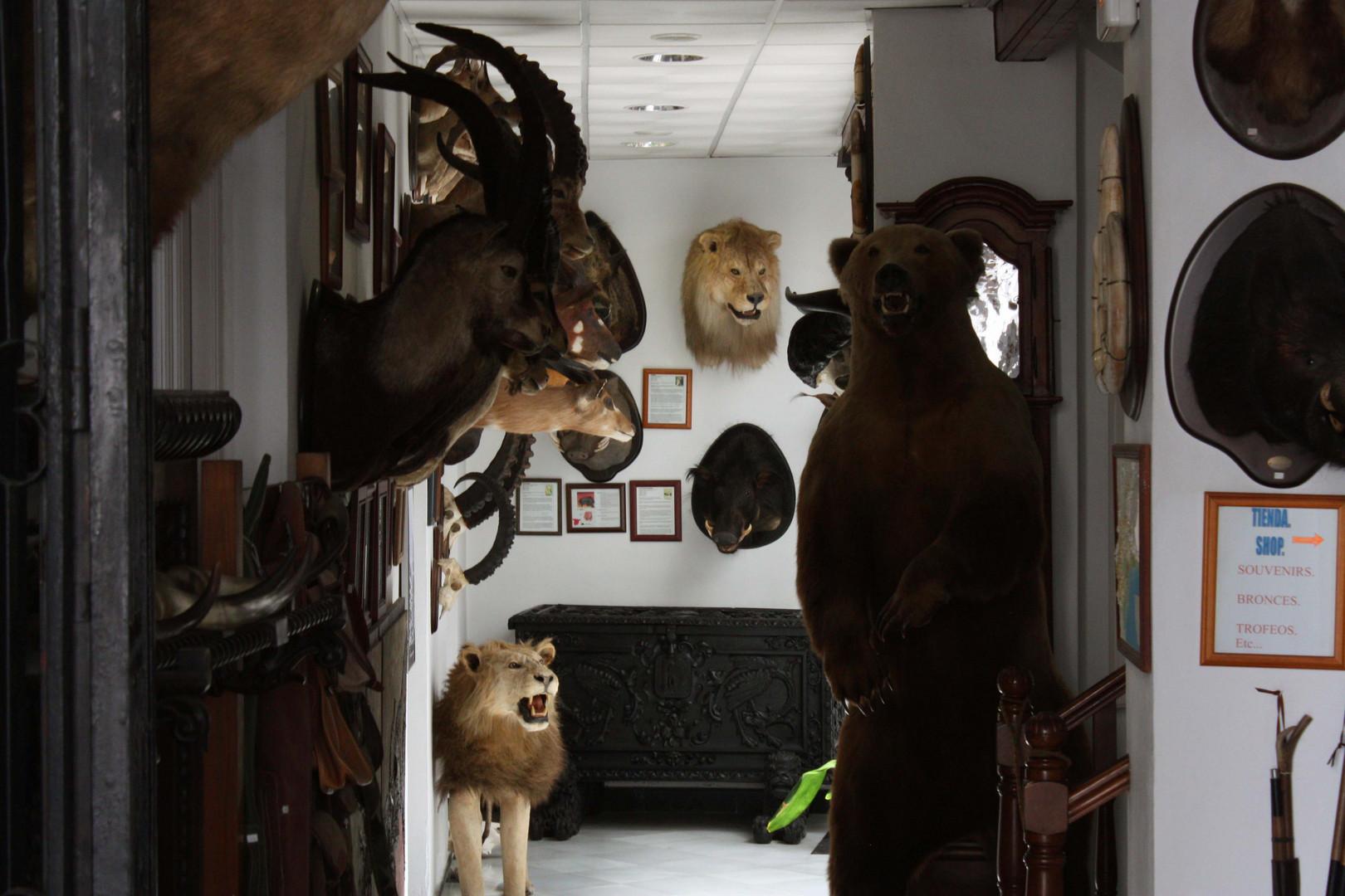 Eingang ins Jagdmuseum...