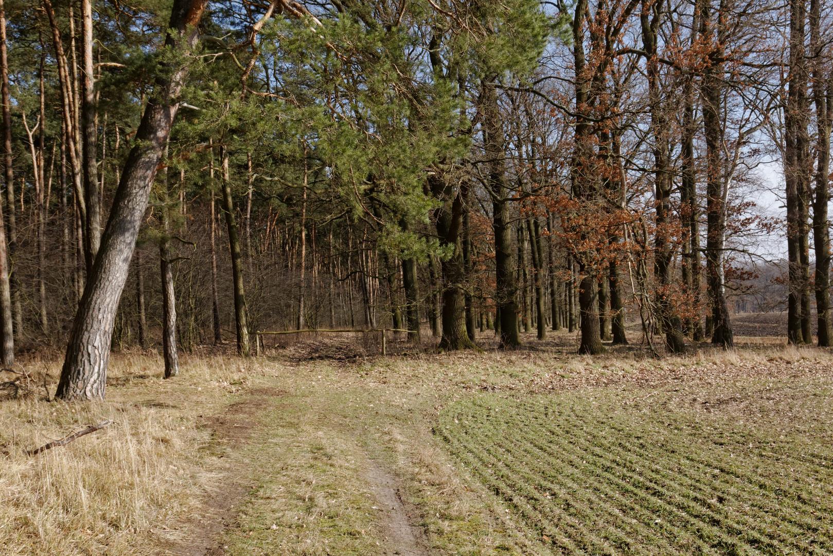 Eingang zum Wald