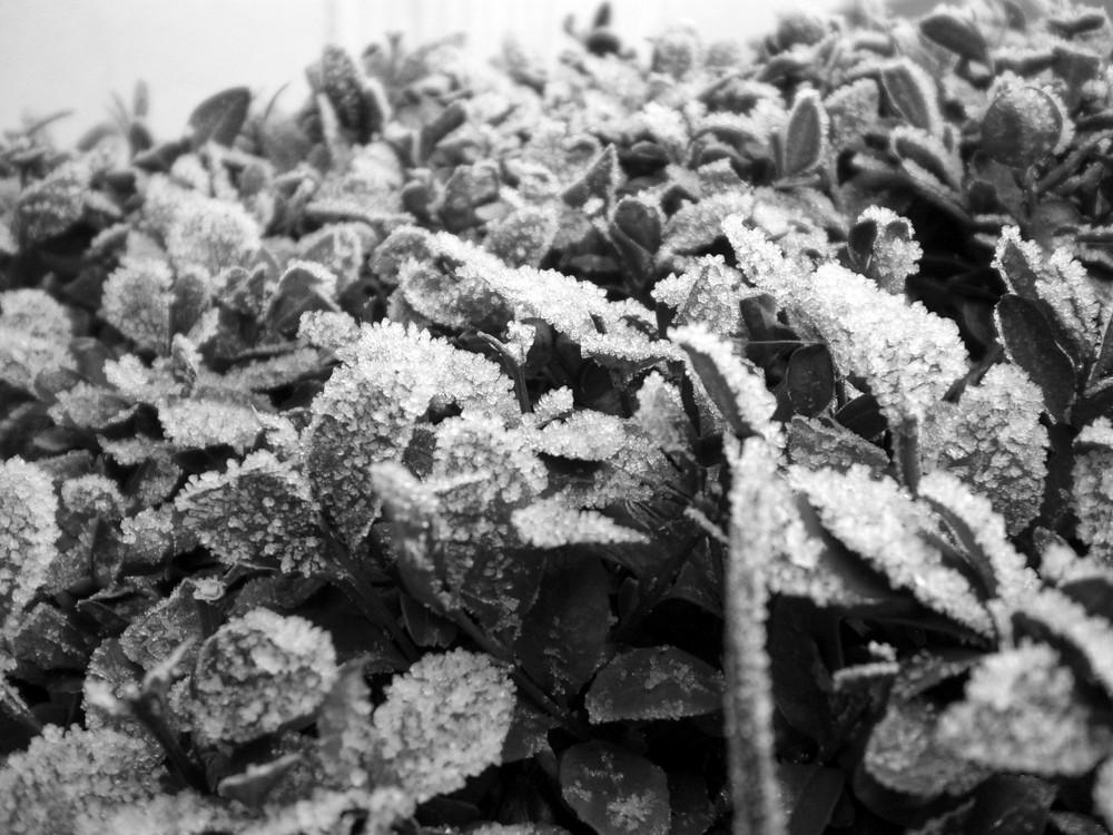 eingefroren...