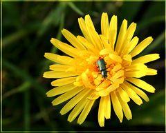 Einhand - Käfer :)