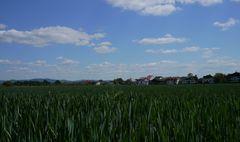 Einhausen - Blick über die Felder auf die Bergstraße