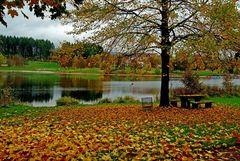 Einige bunte Herbstblätter ...