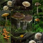 Einige Pilze...
