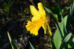 Einläuten zum Frühjahr