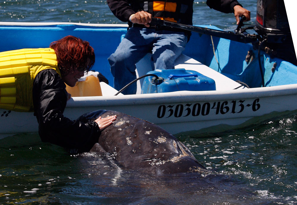 einmal einen Wal berühren