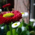 Einmal Frühling....