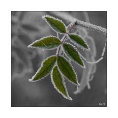 Einrahmender Frost