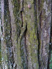 Baum und Stamm