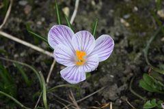 einsam auf den Frühling hoffend