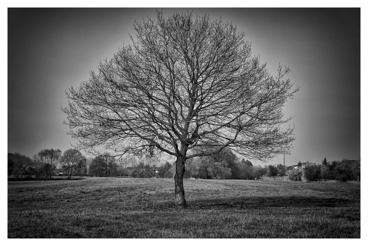 Einsam Baum...