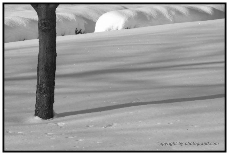Einsam im Neuschnee