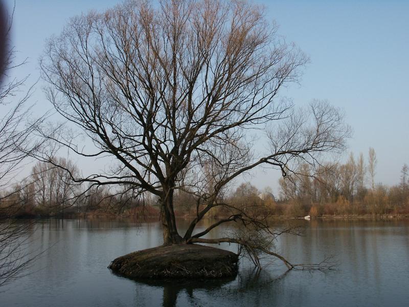 einsam  mitten im see