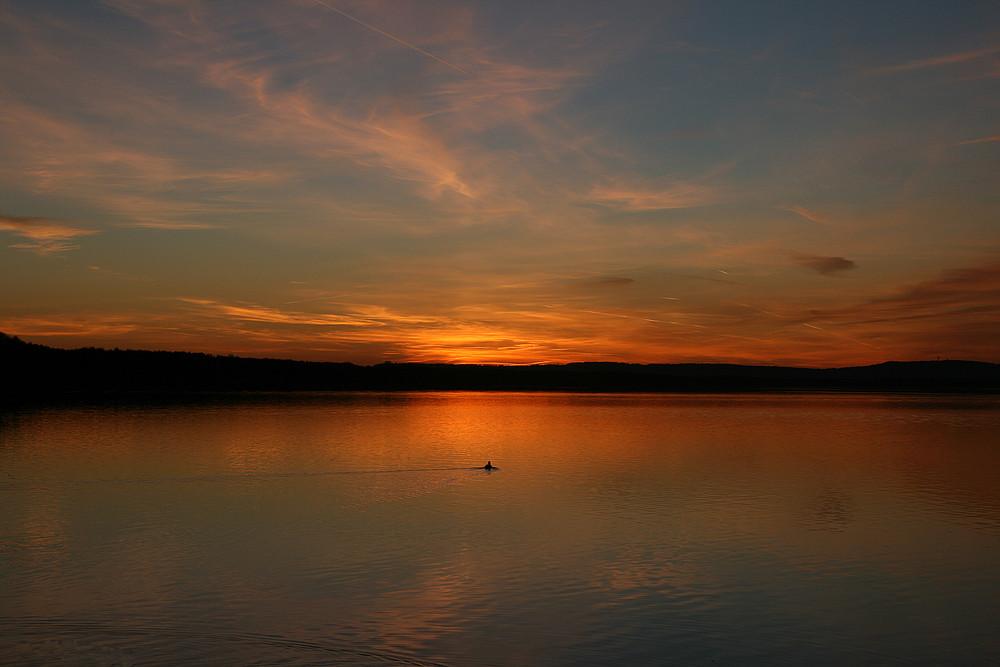 einsame Ente auf dem Steinhuder Meer