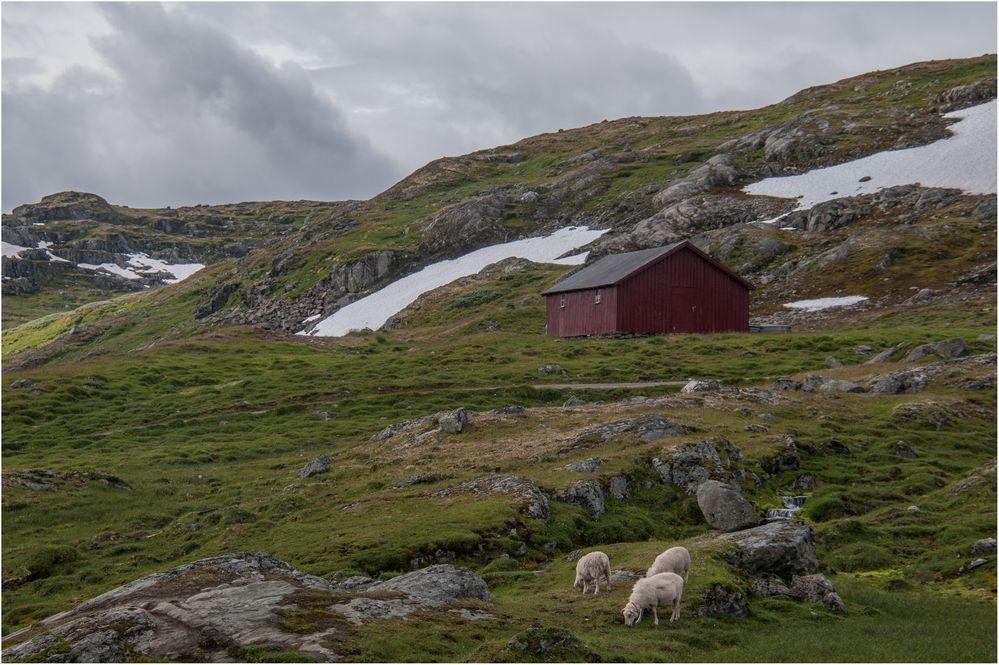 Einsame Hütte mit Schafen