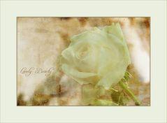Einsame Rose