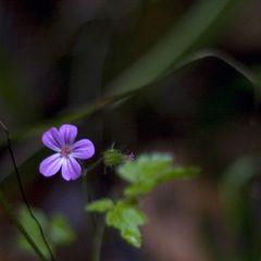 Einsame Schönheit II