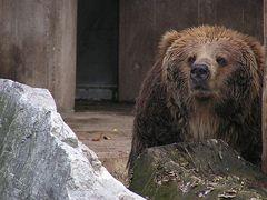 Einsamer Bär