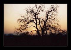 Einsamer Baum am Ende der Straße