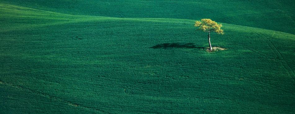 einsamer Baum auf schönen runden Hügeln