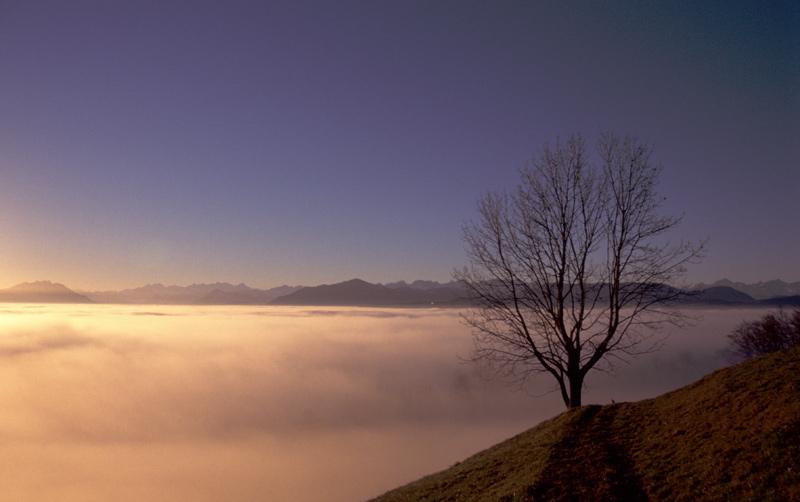 Einsamer Baum im Abendrot