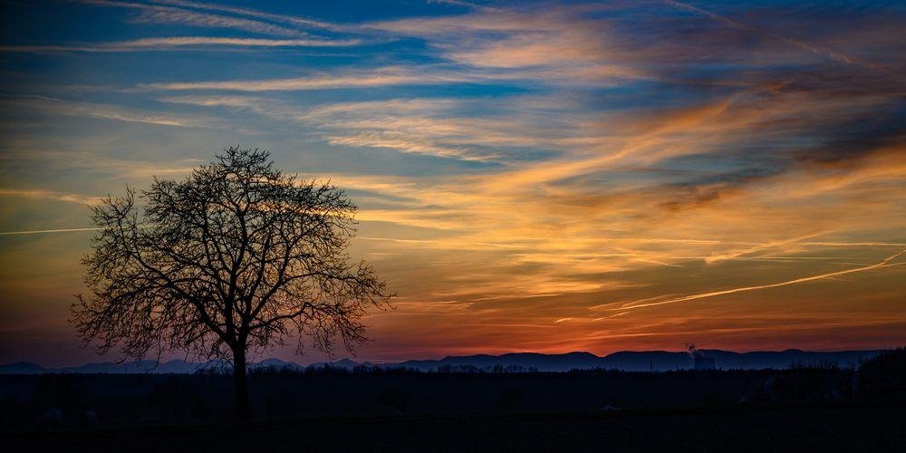 einsamer Baum im Gegenlicht nach Sonnenuntergang