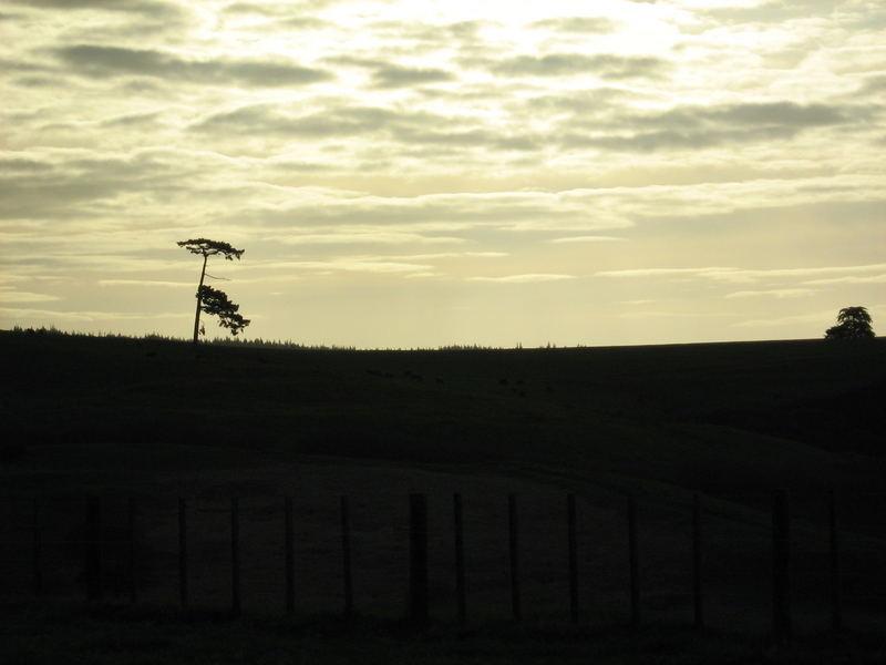 Einsamer Baum in der Abenddämmerung