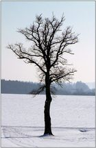 Einsamer Baum in der Wintersonne