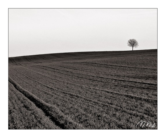 Einsamer Baum sucht ...