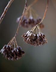 Einsamer Samen