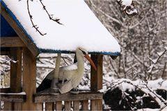 Einsamer Storch im winterlichen Frühling