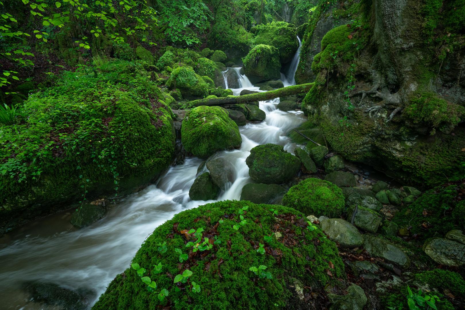 Einsamer Urwald