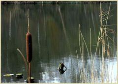 Einsamer Wächter am Seeufer