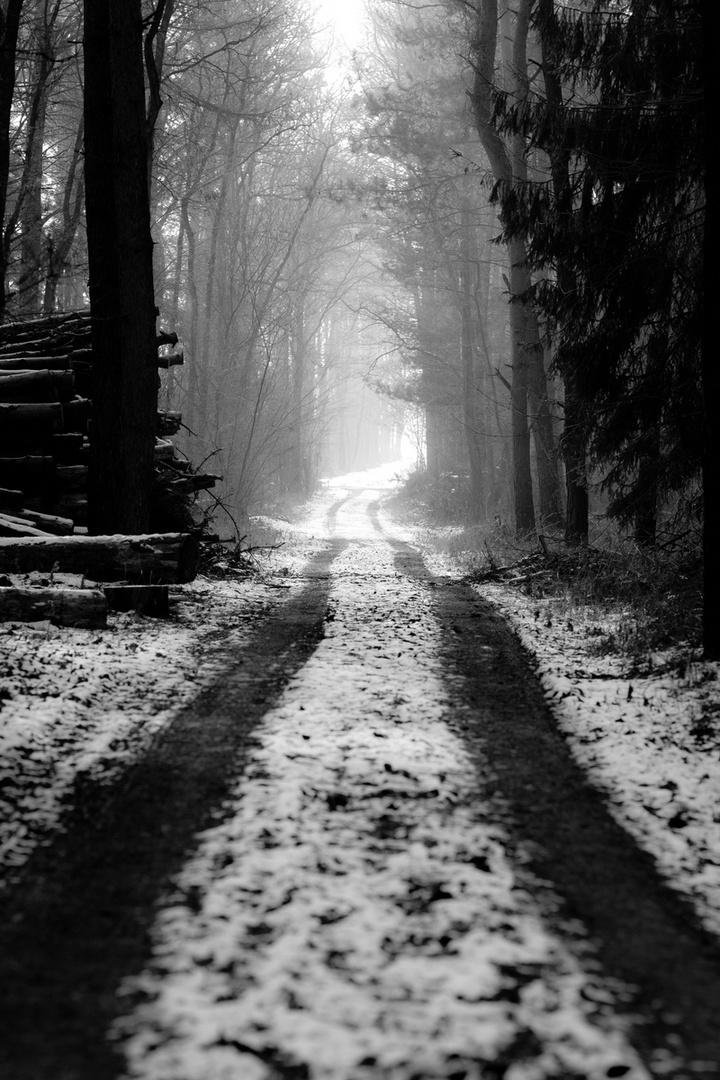 Einsamer Waldweg