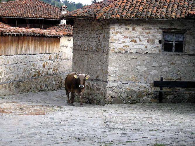 Einsamer Weg in den Stall (Koprivtschiza)