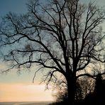 Einsamer, winterlicher  Baum