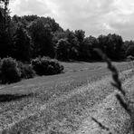 Einsames Feld