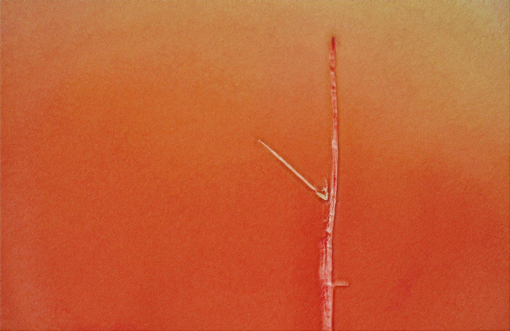 einsammes gras in saum des rötlichen lichtes ...