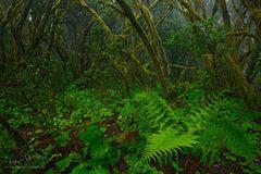 Eintauchen in den Nebelwald