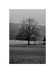 einzelbaum