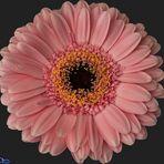 Einzelne Blüte...