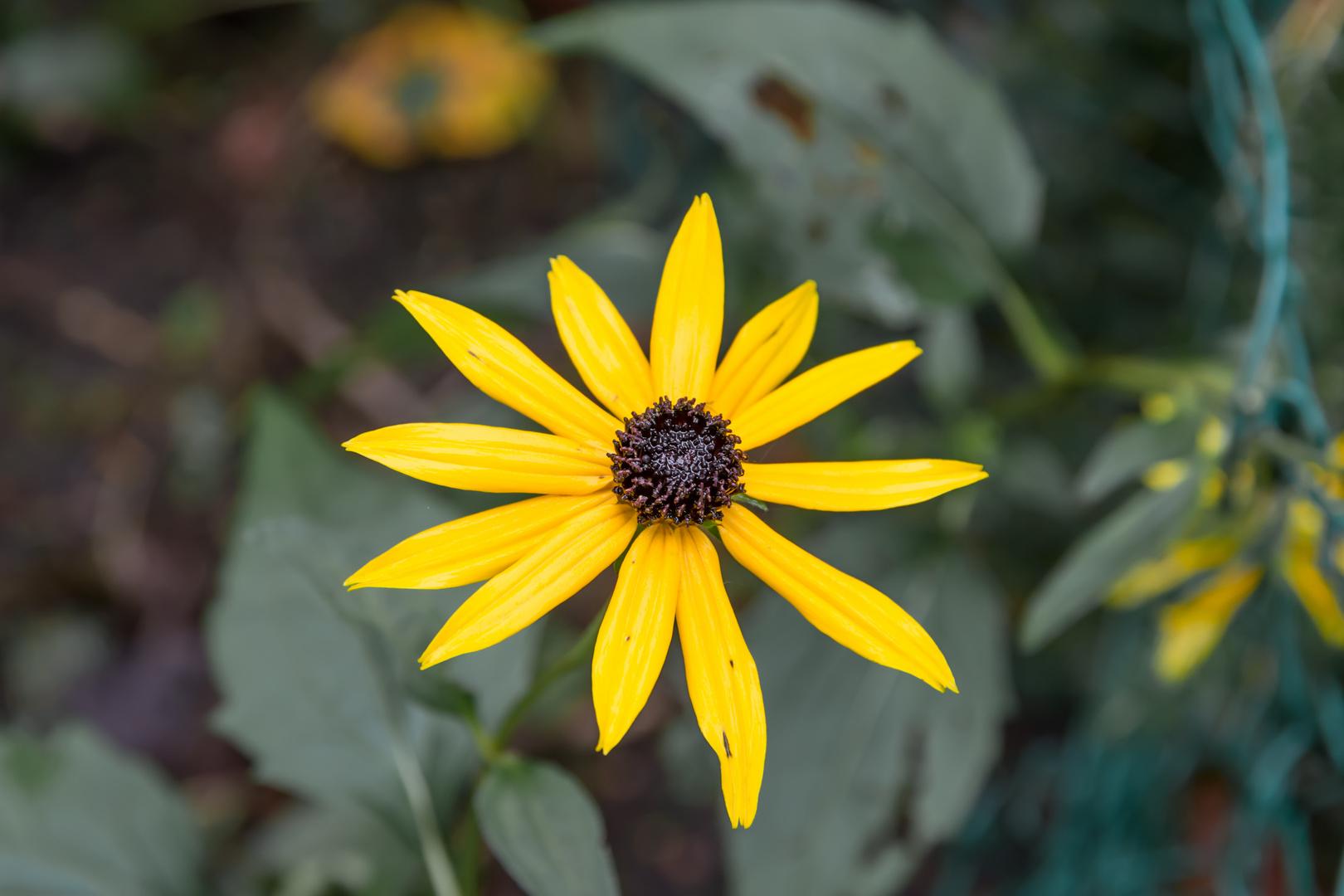 Einzige Blume
