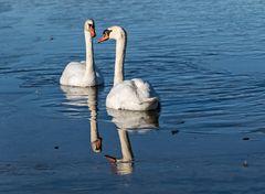 Eis am See - Das paar