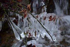 Eis-Blätter- Ast