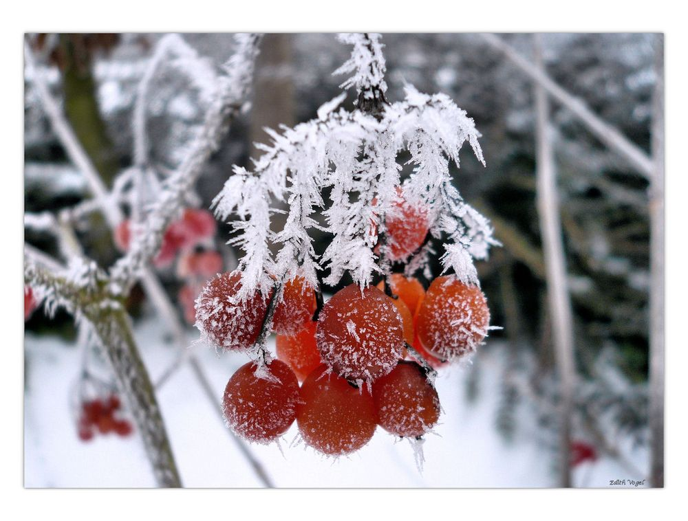 EIS - Früchte